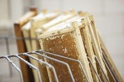 Het oogsten van verse honing van de bijenbijenkorf Royalty-vrije Stock Fotografie