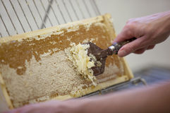 Het oogsten van verse honing van de bijenbijenkorf Stock Foto's