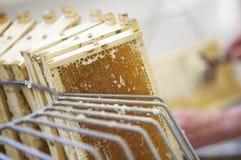 Het oogsten van verse honing van de bijenbijenkorf Stock Afbeelding
