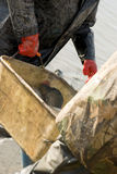 Het oogsten van vissen Stock Foto