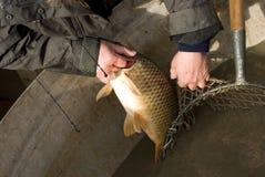 Het oogsten van vissen Stock Afbeelding