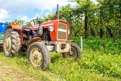Het oogsten van wijndruiven met oude rode tractor royalty-vrije stock afbeelding