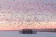 Het oogsuikergoed van Brighton stock foto
