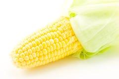 Het Oor van de maïs Stock Afbeelding