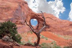 Het oor van de monumentenvallei met boom voordien. Stock Foto's