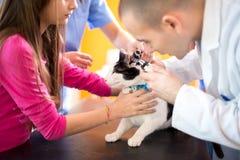 Het oor van de veterinaire het controleren kat bij ambulante dierenarts Royalty-vrije Stock Foto's
