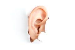 Het oor van de vrouw Stock Fotografie