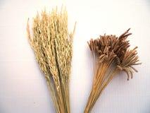 Het oor van rijst en de bloem van het gras Royalty-vrije Stock Foto's