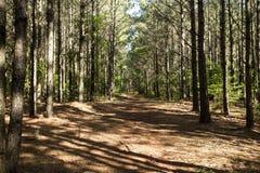 Het oosten Texas Forest Royalty-vrije Stock Afbeelding