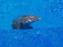 Het Opduiken van de dolfijn stock afbeelding