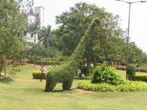 Het openbare tuin mooie gazon met Giraf maakte in boom & struik kijkend zeer mooi Royalty-vrije Stock Afbeeldingen
