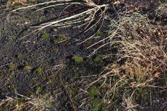 Het opgedroogde gras op de aarde stock fotografie