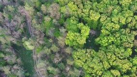Het opheffen van luchtlengte boven boswegkruispunt, het licht van de de lenteavond, 4K stock videobeelden