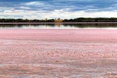 Het opmerkelijke Roze Meer, Australië Royalty-vrije Stock Foto's