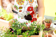 Het opnieuw planten royalty-vrije stock afbeelding