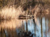 het oppervlaktewater van de oever van het meervijver geen mensen sluit gouden omhoog de herfst Royalty-vrije Stock Afbeelding