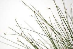 Het optische gras van de vezel Stock Afbeeldingen