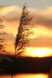 Het opvlammen hitte van de zon Stock Foto's