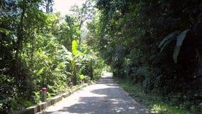 Het opwekken van witte wilde weg bij groen dicht bos met palmen stock video