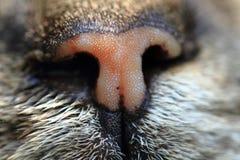 het oranje detail van de kattensnuit Stock Afbeeldingen