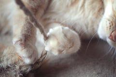 Het oranje Gestreepte kat spelen Stock Afbeeldingen