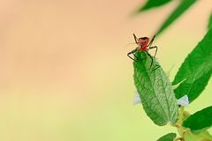 Het oranje insect is insecten die insecten samen eten royalty-vrije stock afbeelding