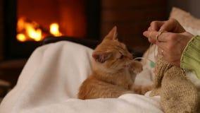 Het oranje katje houdt vrouwenbedrijf bij de open haard in de avond stock videobeelden