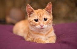 Het oranje katje ligt op het bed