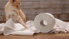 Het oranje katje spelen met toiletpapierbroodje stock footage
