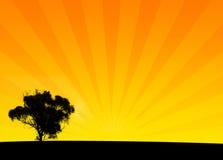 Het oranje Silhouet van de Struik Royalty-vrije Stock Afbeelding