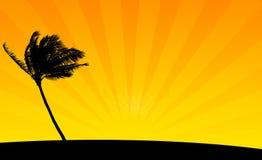 Het oranje Silhouet van de Struik Stock Foto