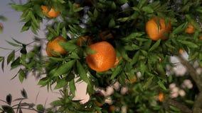 Het oranje vallen stock video