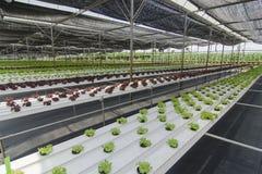 Het organische gewassen groeien royalty-vrije stock afbeeldingen