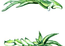 Het organische malplaatje van Aloëvera De getrokken achtergrond van de waterverf hand Stock Afbeelding