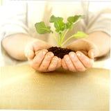 Het organische Planten Stock Afbeeldingen