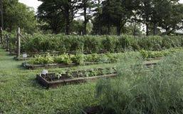 Het organische tuinieren in Ozark Mountains Stock Afbeeldingen