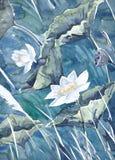 Het originele waterverf schilderen, lotusbloem Stock Afbeeldingen