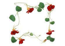 Het ornament van de bloem is geïsoleerdàop het wit Royalty-vrije Stock Foto's