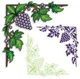Het ornament van de druivenhoek Royalty-vrije Stock Foto