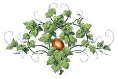 Het ornament van de pompoen Royalty-vrije Stock Foto's