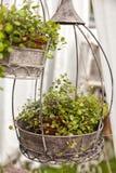 Het ornament van de tuin voor installaties Royalty-vrije Stock Afbeeldingen
