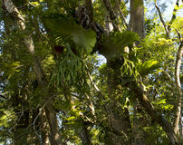 Het oude Australische Bos van Dunny Stock Foto