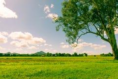 Het oude Australische landschap van het stijlbeeld Stock Foto