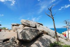 Het oude boom groeien bovenop de rots stock foto