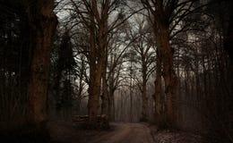 In het oude bos Stock Afbeelding