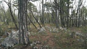 Het oude bos op de berg stock video