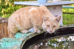 Het oude drinkwater van de werf rode kat van een vulklei op de straat Stock Foto's