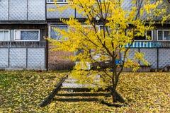 Het oude gebouw in de herfst Stock Afbeelding