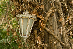 Het oude Hangen van de Lamp op Boom Royalty-vrije Stock Afbeeldingen