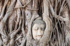 Het oude hoofd van Boedha in Ayutthaya in Bangkok in Thailand royalty-vrije stock fotografie